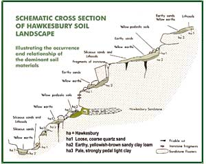 Fig 4: Cross section of Hawkesbury soil landscape