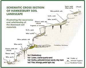 Fig 4: Cross section of Hawkesbury soil landscape