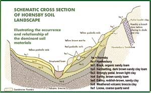 Fig 5: cross section of Hornsby soil landscape